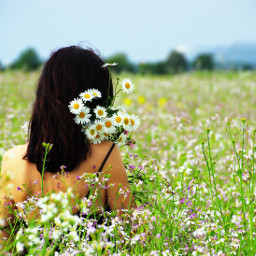 myphoto flowers wildflowers flowerfield daisies dpcwomen dpcfields