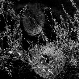 blackandwhite nature spiderwebs outandabout