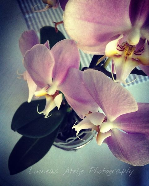 flower orchid lifestyle interesting photography