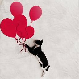 petsandanimals photography freetoedit cute balloon