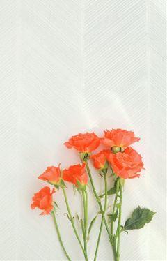 roses flowers red wattpadbackground cover freetoedit