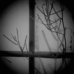 photography nature branches blackandwhite