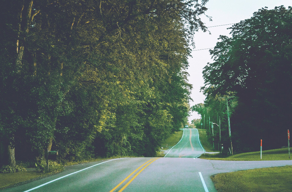 Mindshift Day 261  Strive for progress, rather than the impossibility of perfection.  #mindshift #day261 #wordstoliveby #wordsofwisdom #road #trees #backroads #progress