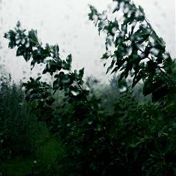 freetoedit rain nature photography autum