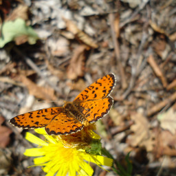 photography baterfly flower msflowers freetoedit