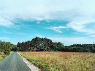 road landscape nature tree travel freetoedit