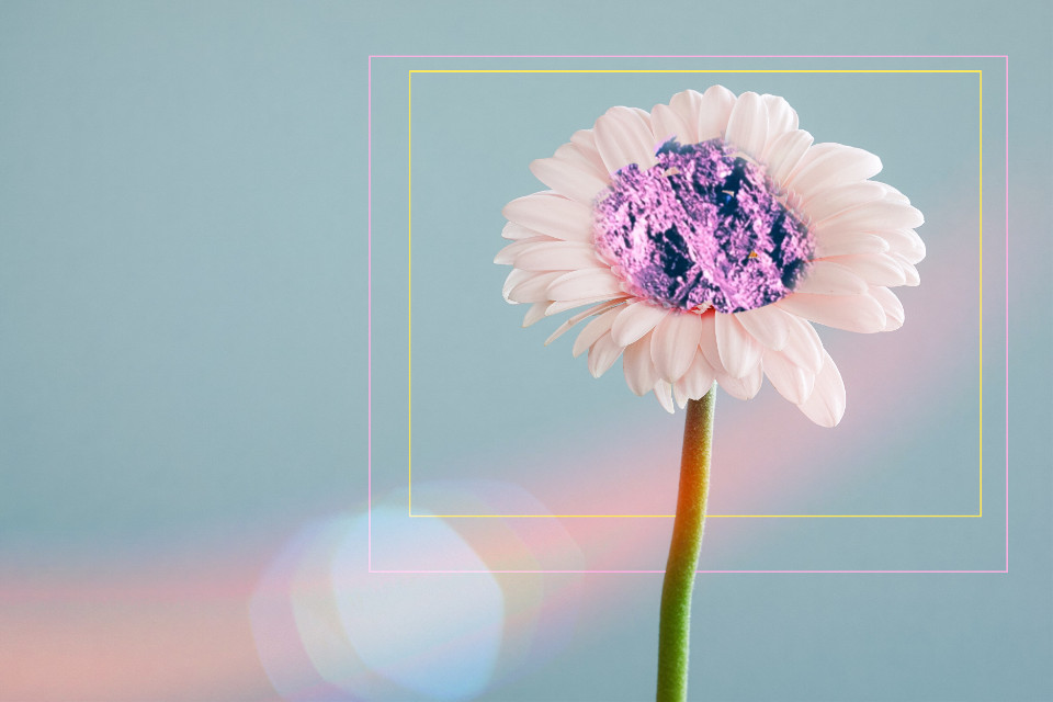 #FreeToEdit #flower #square #pink #blue #white #yellow #line #mountainmagic #mountain #magic #crazylove #socrazy