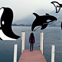freetoedit fish sea people whale
