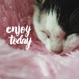 freetoedit cat catlovers teddybear sleep