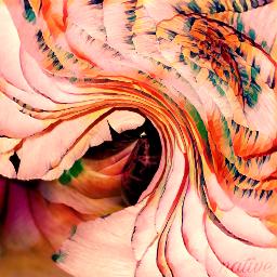 magic art edited rose petals