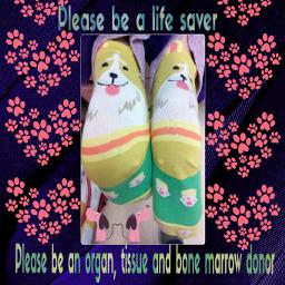 dogsocks dialysissocks dogs dialysis socks