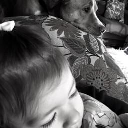 babygirl watchingtv dogsofpicsart babyanddog