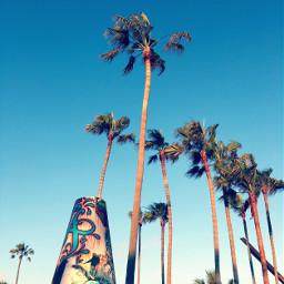 palmtrees beach california