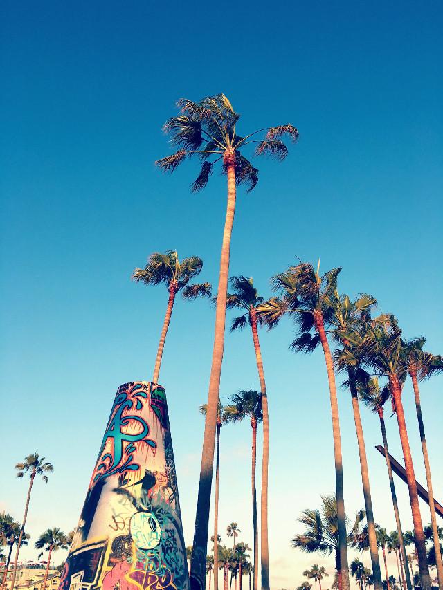 #palmtrees #beach #california