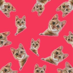 freetoedit cutouttool remixmestars stickers