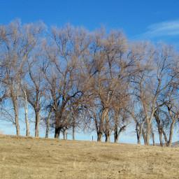dpctrees freetoedit trees landscape wyoming