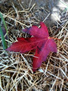 leaves leaf autumn travel