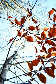 photography nature autumn leaves