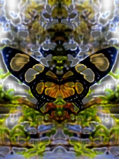 freetoedit mirrormania butterfly pautzisedits