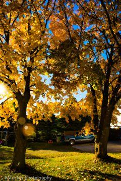 autumn autumncolors colorful photography oileffect